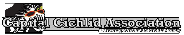 Capital Cichlid Association